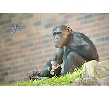 Life Is Like A Monkey Photographic Print