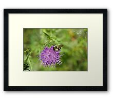 A Little Competition Framed Print