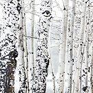 White Tree 2 by Mareike Böhmer