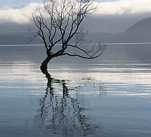 'The tree' lake Wanaka by Eleanor Whibley