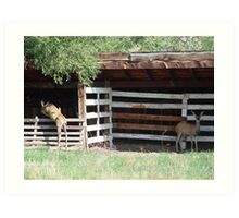 Muley Doe and Hybrid Daughter Art Print