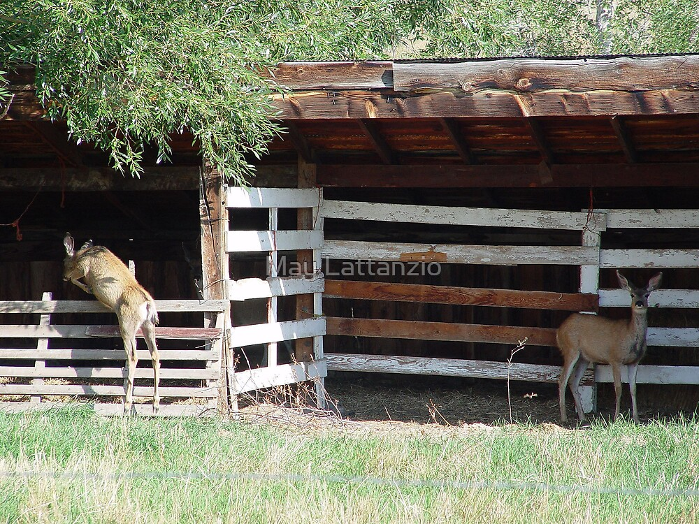 Muley Doe and Hybrid Daughter by May Lattanzio