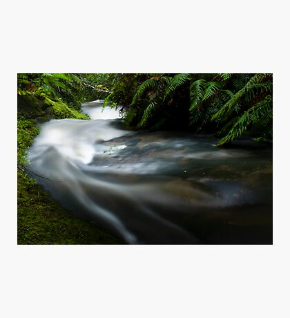 Small stream in the Tangarakau Gorge Photographic Print