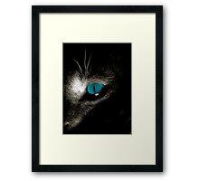 Blue eyed devil Framed Print