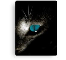 Blue eyed devil Canvas Print