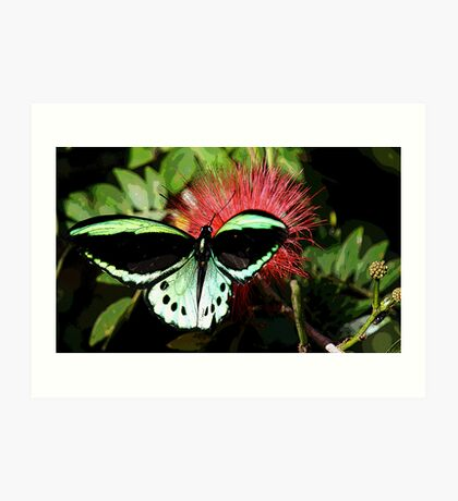 Cairns Birdwing Art Print