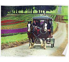 Horses and Carriage - Tulip Farm, Silvan, Victoria Poster