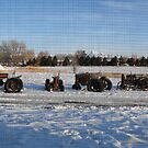 Old Tractors in the Snow by Susan Russell