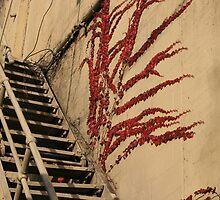 spooky stairway by Lynne Prestebak