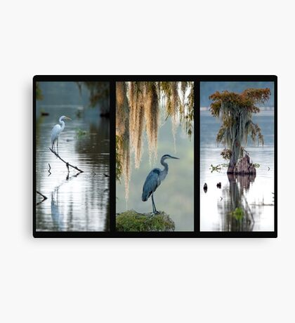 Cypress Island Trio Canvas Print