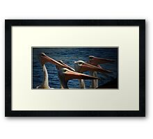 Pelican clan Framed Print