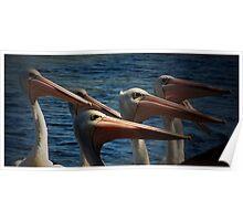 Pelican clan Poster