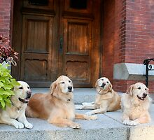 Four Blondes by Laura Dandaneau