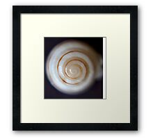 Sea Shells By The Seaside Framed Print