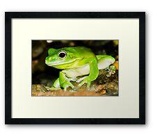 White lipped Tree Frog Framed Print