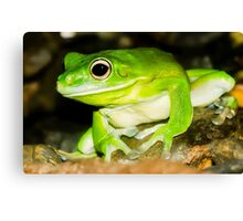 White lipped Tree Frog Canvas Print