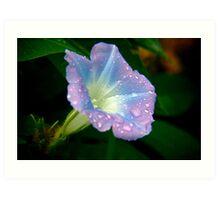 Wild Flower from Nature Art Print