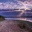 Swan Sunbeams by Mark Waugh