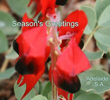 Sturt Desert Pea,Season's Greetings from Adelaide,S.A. by elphonline