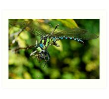 The mighty Dragonfly, the Wasp and the tiny Spider Art Print