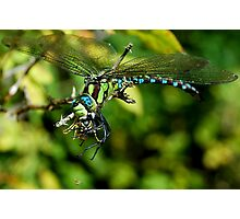 The mighty Dragonfly, the Wasp and the tiny Spider Photographic Print