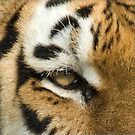 Eye of the Tiger by SusanAdey