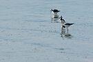 Sea Birds 5 by Werner Padarin
