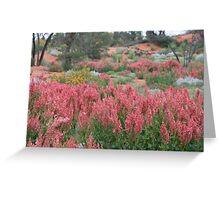 Wild-flowers, near Roxby Downs,S.A. Greeting Card