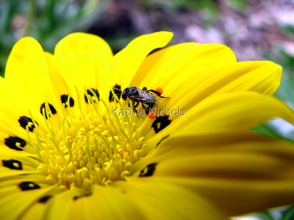Australian Native Bee by Kathie Nichols