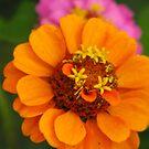 Candy Flowers by Tracy Wazny