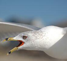 Screaming Gull by MShelsby
