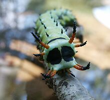 Hickory Horned Devil Caterpillar by Linda Costello Hinchey
