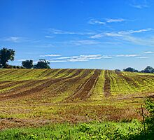 Rolling Fields Norfolk UK by Mark Snelling