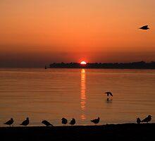 Suns Up by cherylc1