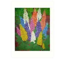 Garden  Lupine Art Print