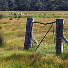 Old gate near the Grampians National Park by Darren Stones