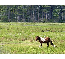 Mounted Nature Photographic Print