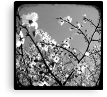 Plum Blossoms Through The Viewfinder (TTV) Canvas Print