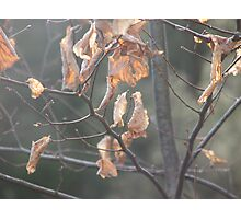 dead leaves Photographic Print