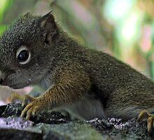little baby sqirrel by donpete326