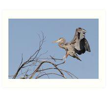 The Landing of the Great Blue Heron Art Print