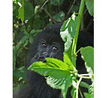 Mountain Gorilla Eye Contact Photographic Print