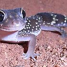 Bernie The Barking Gecko by Creativecap