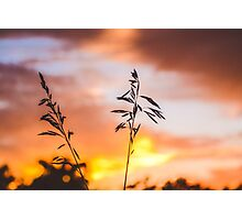 Wheat Against the Sunset Photographic Print