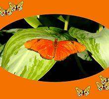 Julia Butterfly by Rosalie Scanlon