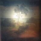 ttv moreton bay by Soxy Fleming