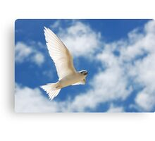Wing Salute - White Tern - Cocos (Keeling) Islands Canvas Print