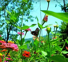 Butterfly with a View by Susan S. Kline