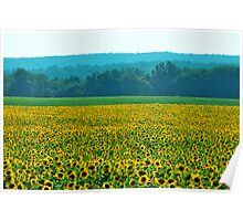 Buttonwood Farms Poster