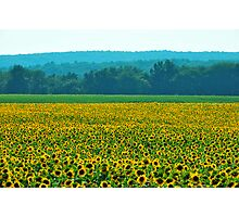 Buttonwood Farms Photographic Print